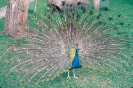 vogels foto_30