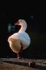 vogels foto_31