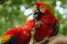 vogels foto_32
