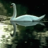vogels foto_33