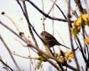 vogels foto_36