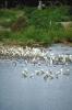 vogels foto_37