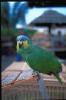 vogels foto_39