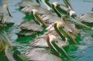 vogels foto_41