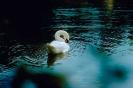 vogels foto_42