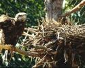 vogels foto_43