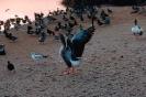 vogels foto_44
