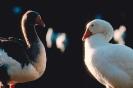 vogels foto_45