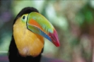vogels foto_51