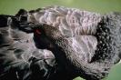 vogels foto_52