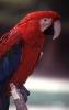 vogels foto_53
