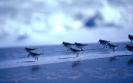 vogels foto_54