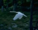 vogels foto_59