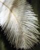 vogels foto_5
