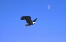 vogels foto_61