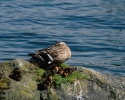 vogels foto_63