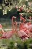 vogels foto_64