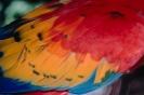 vogels foto_65
