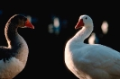 vogels foto_68