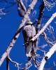 vogels foto_71