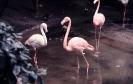 vogels foto_72