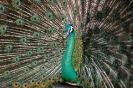 vogels foto_74