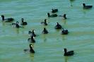 vogels foto_75