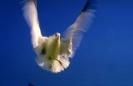 vogels foto_76