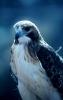 vogels foto_80