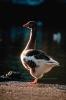 vogels foto_84
