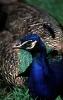 vogels foto_85