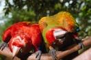 vogels foto_86