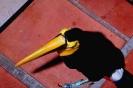 vogels foto_87