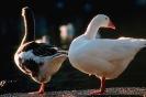 vogels foto_89