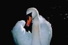 vogels foto_90