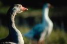 vogels foto_91