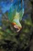 vogels foto_92
