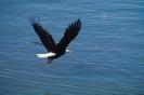 vogels foto_94