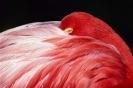 vogels foto_95