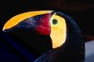 vogels foto_97