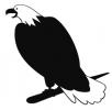 bald_eagle_6
