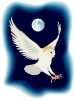 barn_owl_1