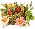 bird-nest_1