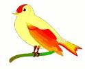 bird_of_peace