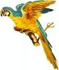 blue-macaw