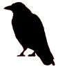 crow_1