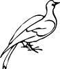 Vogels op naam