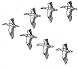 ducks_fly_in_v