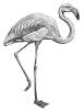 flamingo_BW