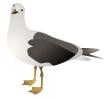 gull_marcelo_staudt